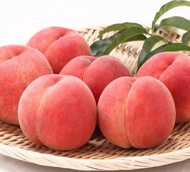 厳選白桃 たっぷり5kg! 硬めの品種おまかせ 秀品 (12~20玉)