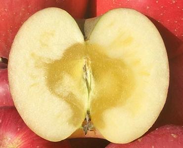 【長野市産りんご】サンふじ 約5kg (15~23玉)【訳あり品】 イメージ
