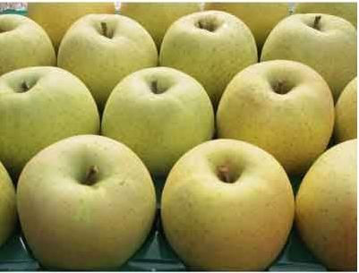 【ふじ発祥の地】藤崎町産りんご 家庭用王林約10kg