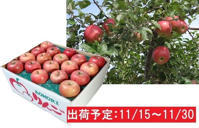土岐りんご園 家庭用サンふじ約10kg 五所川原市産