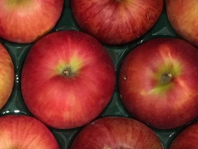 家庭用サンふじ約10kg 津軽産りんご イメージ