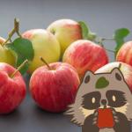 【2019年版】ふるさと納税りんご・梨コスパ最強ランキング10選!