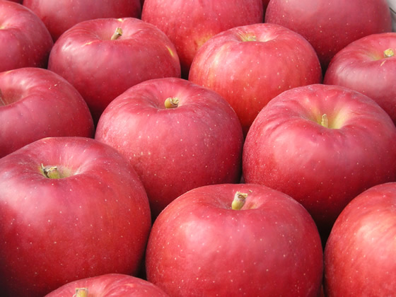 関尾農園 りんご約5キログラム(期間限定) イメージ