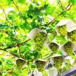 宮崎県 都農町のふるさと納税のご紹介