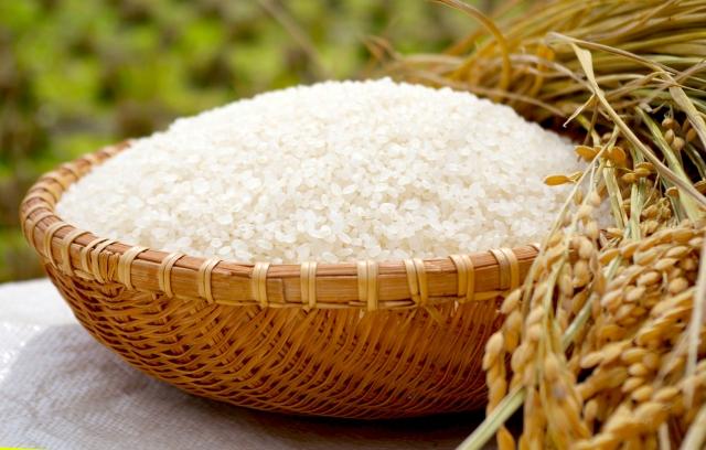 こんちゃん農園の特別栽培米 水主米(みずしまい)精米10kg