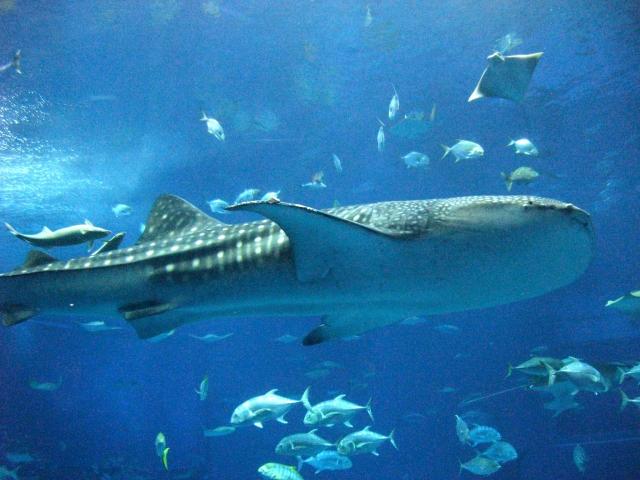 沖縄美ら海水族館 チケット引換券(家族券)