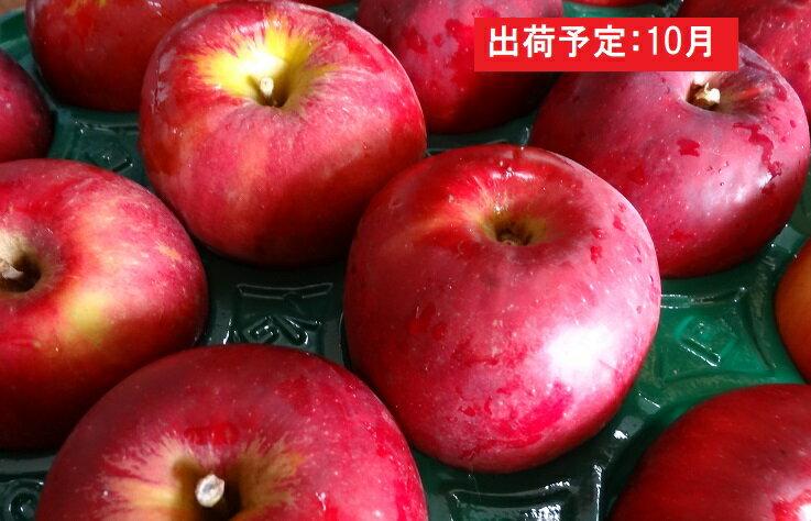大江の恵み 紅玉約10kg家庭用 大江町産 イメージ