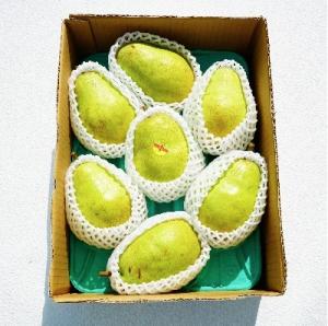 西洋梨(バラード)3kg ご家庭用