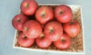 【ご家庭用】鹿角りんご 「サンふじ」2段詰め 約10kg(32~46玉入)訳あり【山麓園】 イメージ