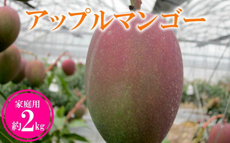 農家さん直送!アップルマンゴー約2kg 家庭用  イメージ