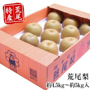 熊本県荒尾市産 荒尾梨 約4.5kg~約5kg