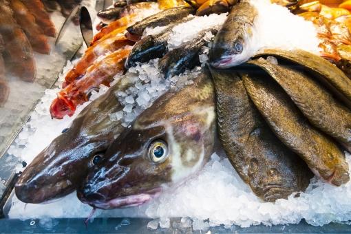 旬の天然魚介類の詰め合わせセット【A】 寄附金額25,000円 イメージ