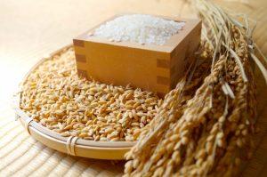 京丹波町産の特別栽培米こしひかり 令和元年度産5kg 寄付金額10,000円