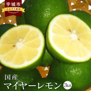 国産 マイヤーレモン 3kg 九州産 熊本県産 グリーンマイヤーレモン