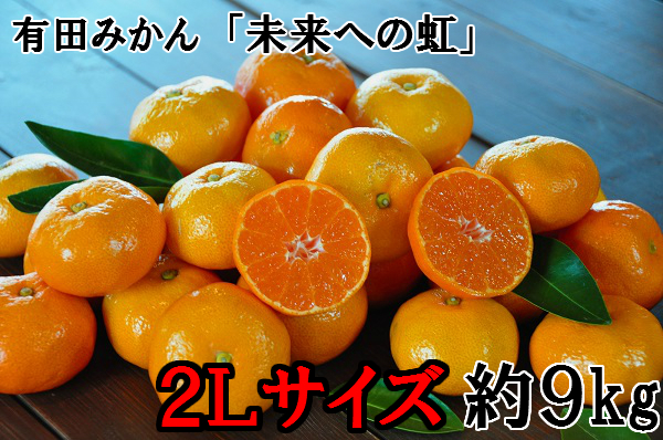 【大粒・2L】有田みかん「未来への虹」(約9kg) イメージ