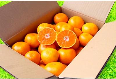 和歌山県産 有田みかん 3kg 1箱 (2S~Lサイズ混合) イメージ