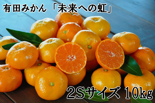 【小粒・2S】有田みかん「未来への虹」(10kg)
