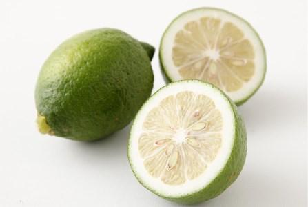 有機肥料100%で育てた「グリーンレモン」(2kg) イメージ