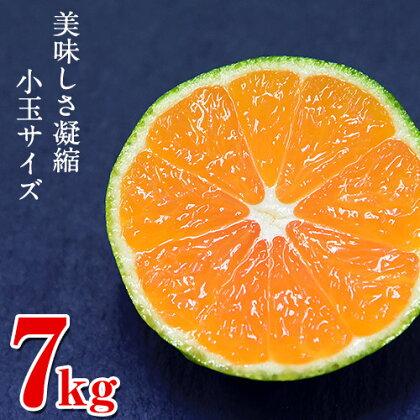 熊本県産ひとくちもぎたてみかん7kg(2S-3Sサイズ)  イメージ