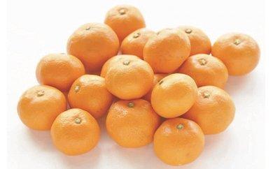 2位季節の柑橘