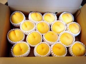 天童市黄金桃
