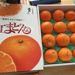 ふるさと納税 愛媛県松山市ロープウェイ、坊ちゃん列車の割引、松山城のチケット等と紅まどんな