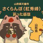 ふるさと納税 山形県天童市 さくらんぼ(紅秀峰)